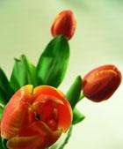 1. Koje je radno vrijeme i područje dostave cvijeća Cvjetex-a, Dostava cvijeća Rijeka